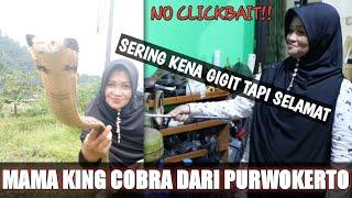 Download Video IBU PENAKLUK KING COBRA DARI PURWOKERTO MP3 3GP MP4