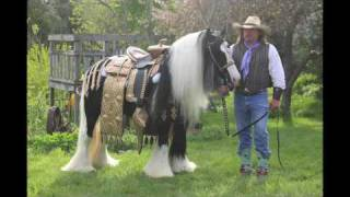 Gypsy Vanner for Sale Wagner Rides A Golden Saddle