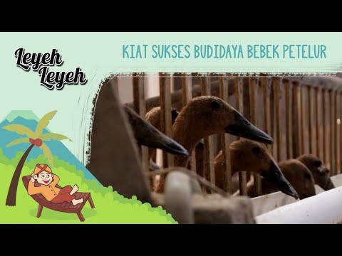 Kiat Sukses Budidaya Bebek Petelur | Leyeh-leyeh