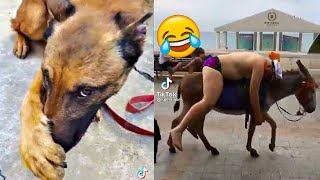 TikTok Try not to LAUGH & Try not to say AWW CHALLENGES 😂🤣😍 🥰