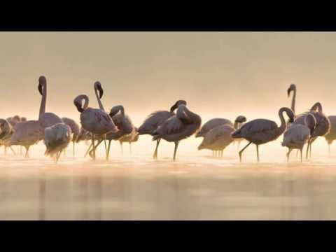 Aves de la provincia de Málaga