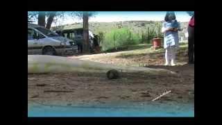 preview picture of video 'CETRERIA, CAT Lago Bornos.- manolo@vion'