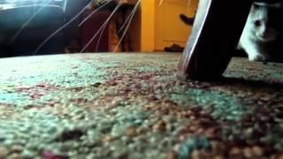 Смотреть онлайн Один день из жизни кота от первого лица