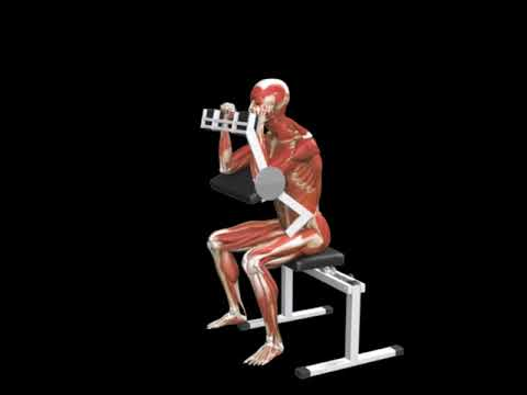 Triceps Extension (Lever)