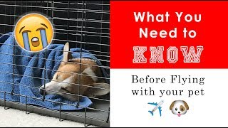 DON'T FLY WITH YOUR DOG in airplane cargo before you see this