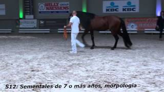 Concurso Morfologico Oud-Heverlee 2015