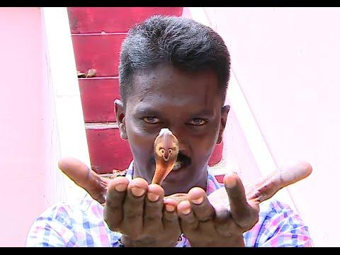 Vava Suresh Caught baby Cobra Snake inside fish tank   SNAKE MASTER EPI 150 1/2   Kaumudy TV