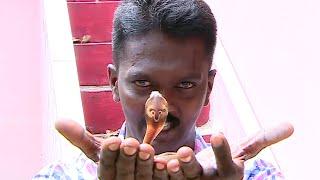 Vava Suresh Caught baby Cobra Snake inside fish tank   SNAKE MASTER EPI 150 1/2   Kaumudy TV - Video Youtube