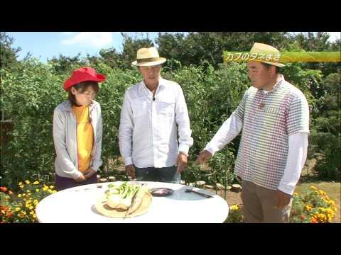 カブ種まきと葉ネギ収穫・害虫対策