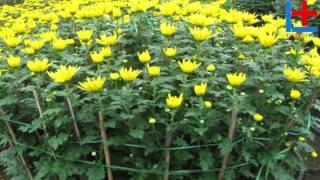 Nên cắm những loại hoa này lên ban thờ ngày Tết để rước tài lộc  - Đồ Cúng Tâm Linh