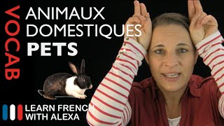 Pets in French (basic French vocabulary from Learn French With Alexa)