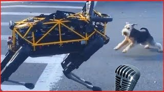 Смотреть самые смешные собаки! Лай собаки видео 2018 #8 видео приколы