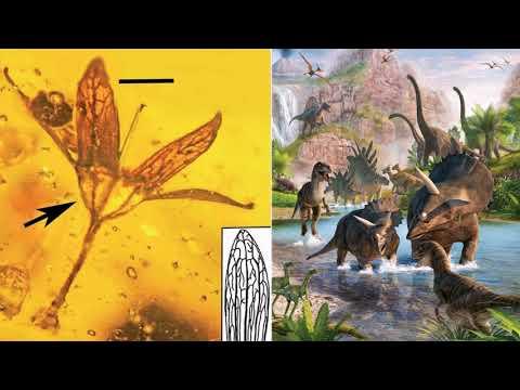 Палеонтологи обнаружили в янтаре цветы из эпохи динозавров