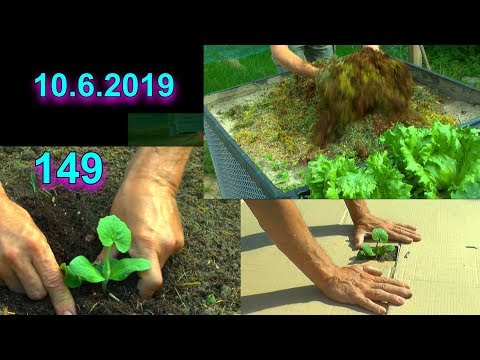 Garten Spezial Hochbeet Kürbis einpflanzen Gartenrundgang Kräuter Gemüse Hochbeet düngen