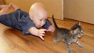 Vtipné Kočky A Děti Si Hrají Spolu - Roztomilé Kočky