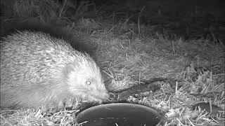 Wildlife Trail Camera - 2.5.2019