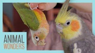 Parrot Parts | What