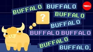 Buffalo buffalo buffalo: One-word sentences and how they work – Emma Bryce