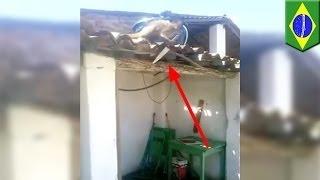 Пьяная обезьяна размахивает ножом на крыше