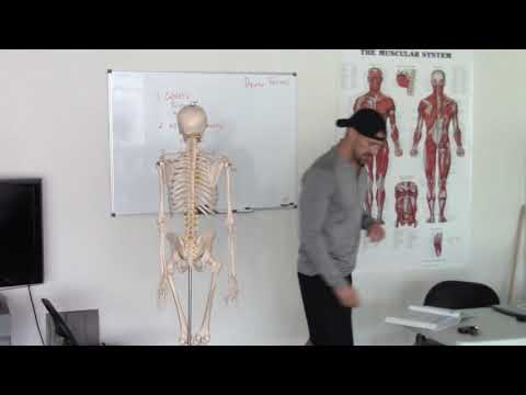 Download NASM Upper Cross Syndrome | Show Up Fitness Internship Mp4 HD Video and MP3