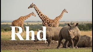 INOpets.com Anything for Pets Parents & Their Pets Zebra, Rhino, Giraffe, Crocs, Waterberg Nature