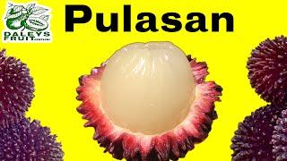 Pulasan Fruit Trees outside of the tropics?