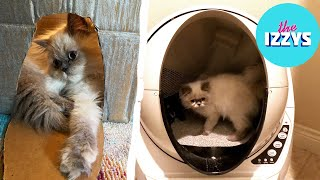 We Review the Most Expensive Litter Box ON THE PLANET