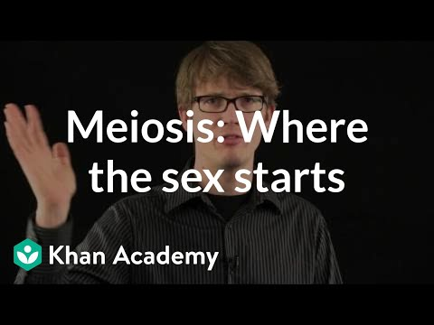Sex on the floor meiosis