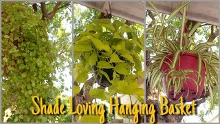 Best Plants For Hanging Basket That Grow In Shade | Shade Loving Hanging Basket | That Garden Girl