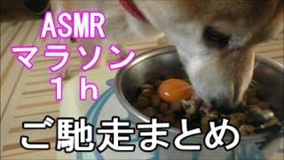 柴犬小春 【マニア限定ASMRマラソン1h】盛大なる食べつくしまとめ総集編!