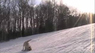 собаки катаются с горы