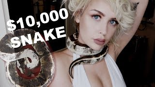 $10,000 SNAKE vs $200 SNAKE (My Two New Pets)