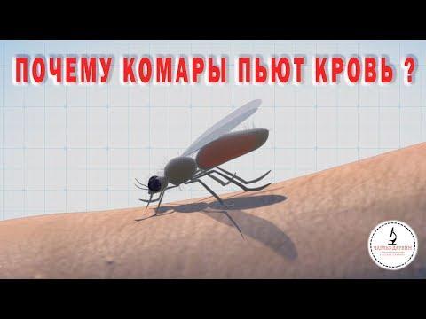Почему КОМАРЫ СОСУТ КРОВЬ? Why do mosquitoes drink blood?