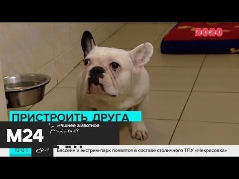 Брать ли с собой домашнее животное за границу - Москва 24