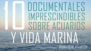 10 Documentales Impactantes Sobre Peces Y Vida Marina