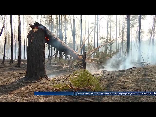 В Ангарске предотвратили крупный лесной пожар
