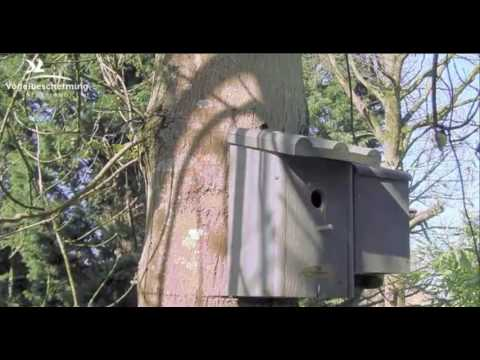 Blue Tit & Great Tit Visit - 28.03.2017