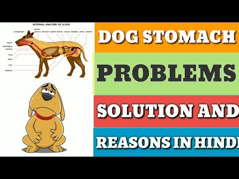 Dog Stomach Problems | Pet Care - Dog Digestive System | IN HINDI