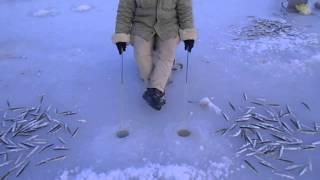 Прикормка для наваги и корюшки зимой