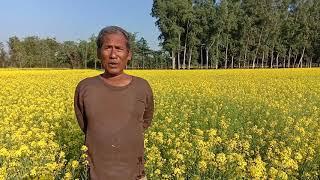 Organic Mustard Cultivation At Hatia, Raaiganj, Uttar Dinajpur