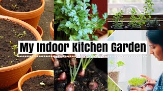 How I Grow Plants In My Kitchen In Malayalam   Grow Herbs From Kitchen Spice Rack  