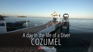 A Day in the Life of a Diver: Cozumel