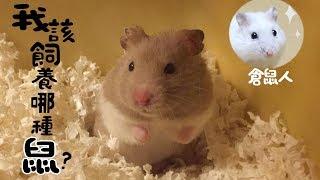 《倉鼠人》我適合養什麼鼠?七種類鼠飼養分享!