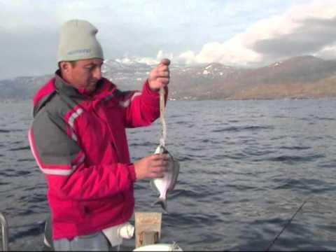 Ψάρεμα με σιλικονούχο καλαμαράκι
