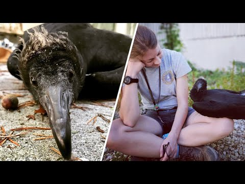 These People Earned the Trust of a Vulture - Heartwarming!
