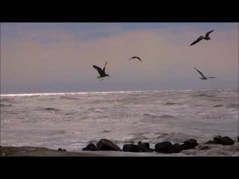 Mare d'AMARE - Videopoesia