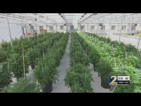 Governor says he will not sign bill to cultivate marijuana in Georgia