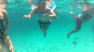 preview picture of video 'Turtles in Carlisle Bay Barbados. GoPro Underwater.'
