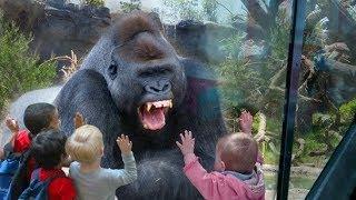 Дети в зоопарке. Приколы с животными. Смешные коты и собаки