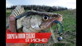 Где лучше рыбалка в июне